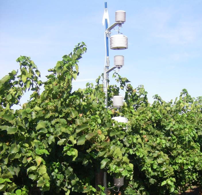 Cool Solution For Sa U0026 39 S Heat Stressed Vines